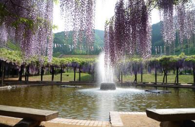 shirai oomachi fuji park