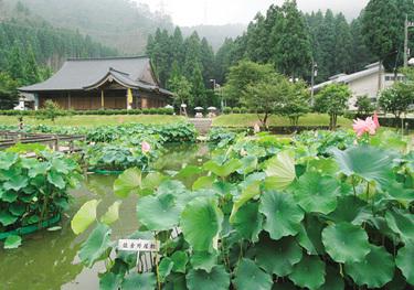 hanahasu park